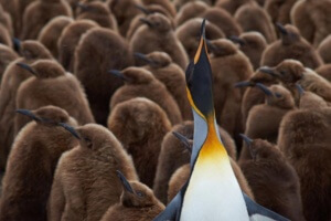 Google Penguin 4.0 and Backlinks