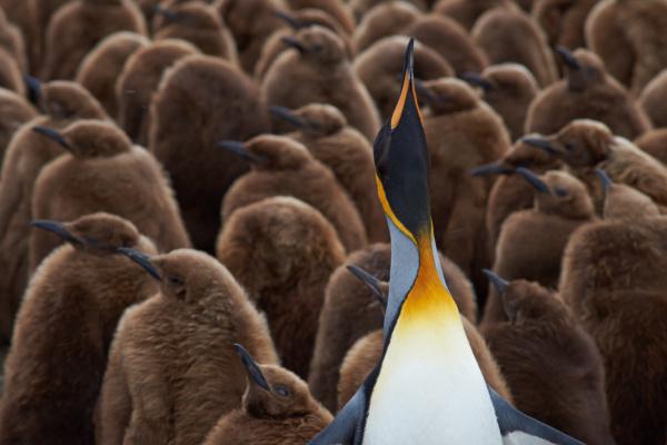 Google Penguin 4.0 and Backlinks